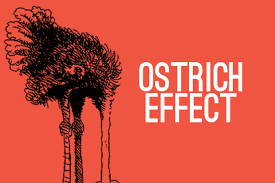 ostrich-effect-images